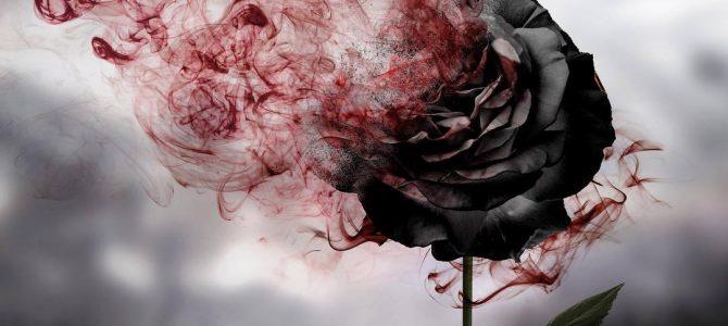 Ein Foto – das schwarze Rosen, auflöst, in den satanischen und oder sadistischen Spielen! Grüße – Erzdruide und Großmeister – Herr Thomas Michael Giesen – AZ-AAZ-BZ-AZ-BZ-Spielzerstörer zum Schutz – weißmagisch geschützt – AZ-BZ-CZ-DZ-AAZ-ZZ-LZ-SZ-TZ-VZ-OZ-AAZ-HDZ-TZ-AZ-©